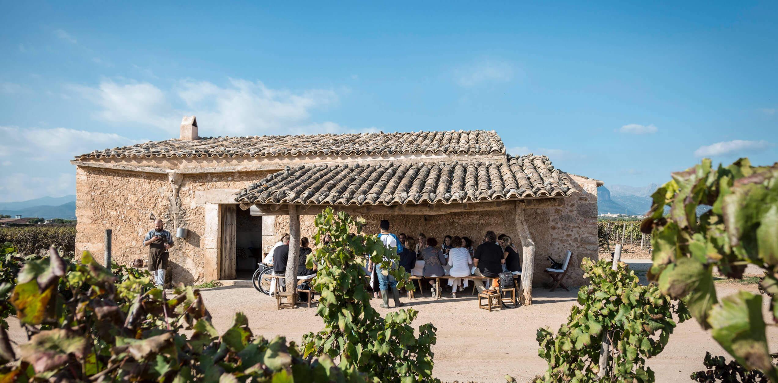 Wein & olivenöl-verkostung